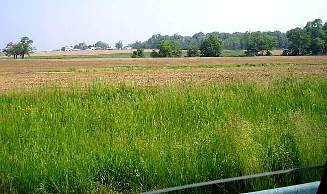 Lot 35 - Beautiful Farm Land