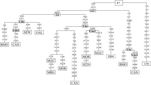 mtDNA Haplogroup U6b