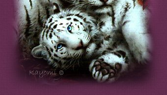 Snow Tiger Pair