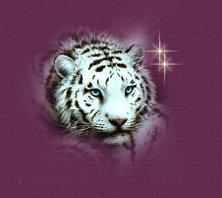 Small Snow Tiger