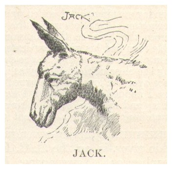 Jack.