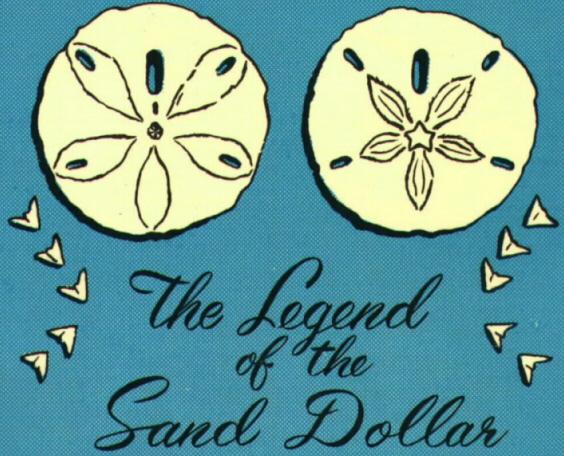 Broken Sand Dollar Drawing